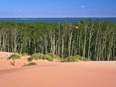 Desert Landscape with grassy sand dunes and coniferous trees with Łebsko Lake in background, Słowinski National Park, Poland